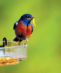SideDish Feeder with Mealworms